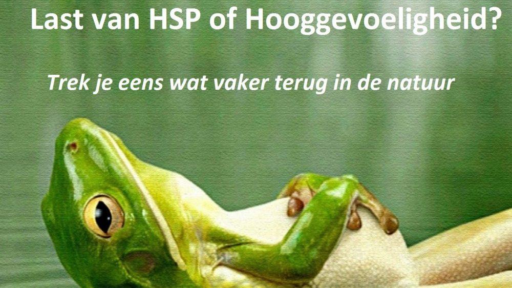 Kikker HSP